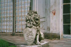 Löwe Bild 1