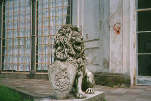 Löwe Bild 2