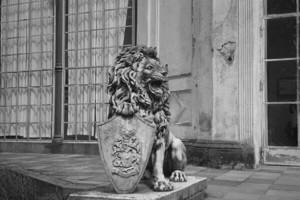 Löwe Bild 3