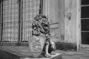 Löwe Bild 4