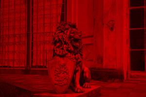 Löwe Bild 5