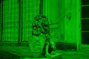 Löwe Bild 6